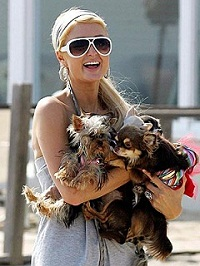 Paris Hilton with Dogs