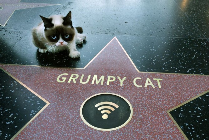 """Have You Heard Of """"Grumpy Cat""""? You Wont Believe How Much ..."""