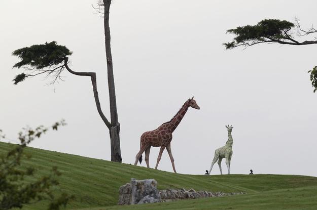 Kim Dotcom's Giraffe Statues
